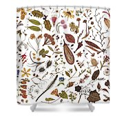Herbarium Specimen Shower Curtain