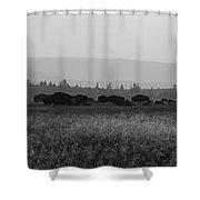 Herd Of Bison Grazing Panorama Bw Shower Curtain