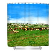 Herd Of Cows Under A Blue Sky In Green Hills Shower Curtain