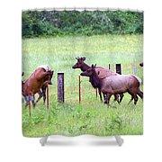 Herd Of Elk Leaping - Western Oregon Shower Curtain