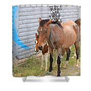 Herd Of Horses On A Street Shower Curtain