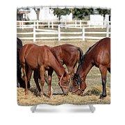Herd Of Horses Ranch Scene Shower Curtain
