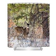 Herd Of Mule Deer In Deep Snow Shower Curtain