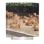 Herd Of Stags. Shower Curtain
