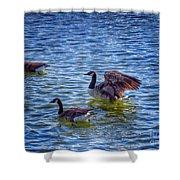 Herding Geese Shower Curtain