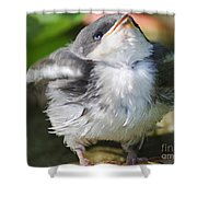 Here Comes Mommy Shower Curtain by Randy Bodkins