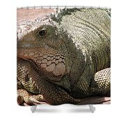 Here Leezard Leezard Shower Curtain