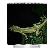 Here Lizard Lizard Shower Curtain