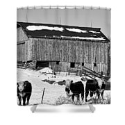 Hereford Barn Bw Shower Curtain