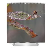 Here's Lookin' At You- Dragonfly Shower Curtain