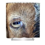 Here's Looking At You Kid - The Truth About Goats' Eyes Shower Curtain