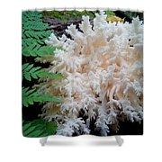 Mushroom Hericium Coralloid Shower Curtain