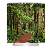Heritage Forest 2 Shower Curtain