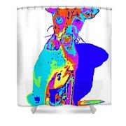 Hermana Muy Curiosa Shower Curtain