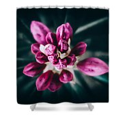 Hermanos Shower Curtain