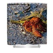 Hermit Crab- Florida Shower Curtain