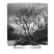 Hermit Island Tree 0912 Shower Curtain