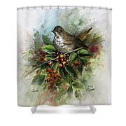 Hermit Thrush Shower Curtain