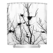 Heron 2 Shower Curtain