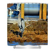 Heron Along The Shore Shower Curtain