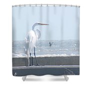 Heron At Rest Shower Curtain