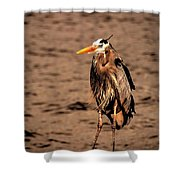 Egret Bad Feather Day Shower Curtain