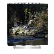 Heron By A Stream Shower Curtain