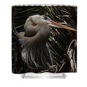Heron Close-up Shower Curtain
