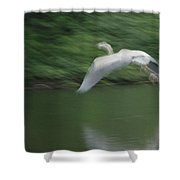Heron Glide Shower Curtain