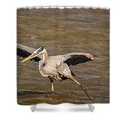 Heron - Hokey Pokey Shower Curtain