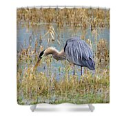 Heron Hunting In Shallows Shower Curtain