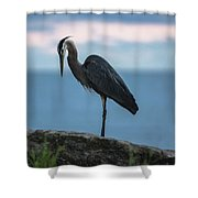 Heron In Colchester Shower Curtain