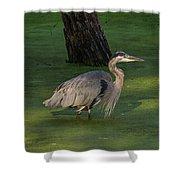 Heron In Dark Pond Shower Curtain