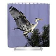 Heron In Fern Tree Shower Curtain