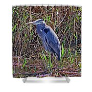 Heron In Marshes Shower Curtain