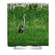 Heron In The Grasses Shower Curtain