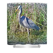 Heron In The Wetlands Shower Curtain