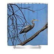 Heron In Tree  4998 Shower Curtain