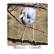 Heron On Branch Shower Curtain