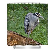 Heron On Log Shower Curtain
