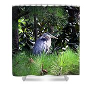 Heron On Pinetree Shower Curtain