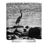Heron On The Rocks Shower Curtain by William Selander