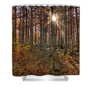 Heron Pond Cypress Trees Shower Curtain
