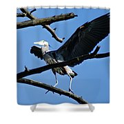 Heron Spreads Wings Shower Curtain