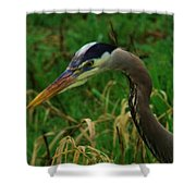 Heron Stare Down Shower Curtain