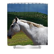 Hero's Horse-colorful Background Shower Curtain