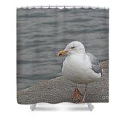 Herring Gull In Copenhagen Shower Curtain