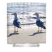 Herring Gulls On The Beach Shower Curtain