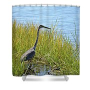Herron In The Grasses Shower Curtain