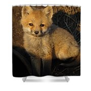 Here's Looking At You, Kit. Shower Curtain